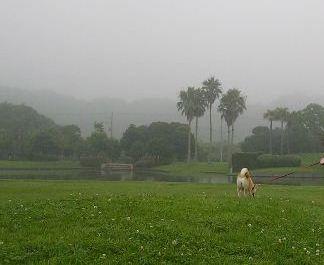 7月27日(木)・・・うり坊5匹が庭に!!_f0060461_1442125.jpg