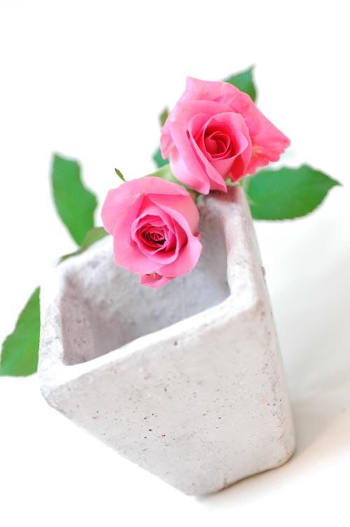 バラ シャネル ピンク