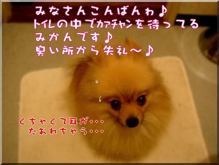 b0078073_223955.jpg
