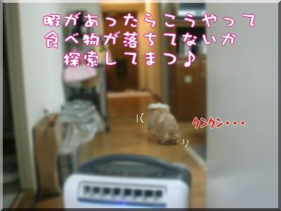 b0078073_2331530.jpg