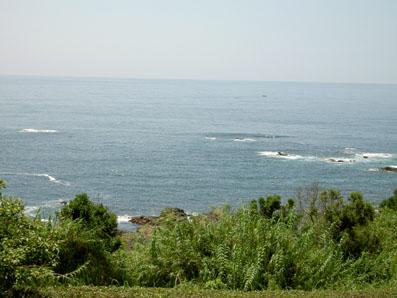 土佐の海は、こじゃんとえいき、きてみいやっ!_f0039487_1512424.jpg