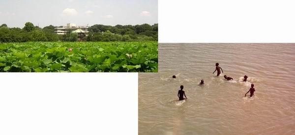 不忍池の蓮見とジュバ川で水遊び_f0045090_15333075.jpg