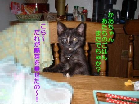 a0046317_08794.jpg