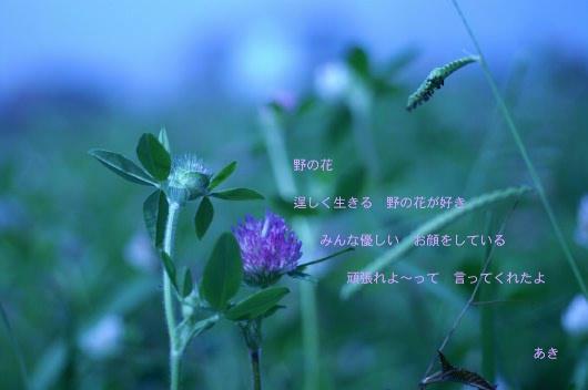 b0033423_1903948.jpg