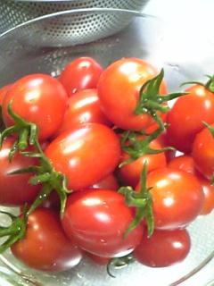 今日の収穫_a0008185_954426.jpg