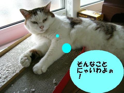 b0097121_17325398.jpg