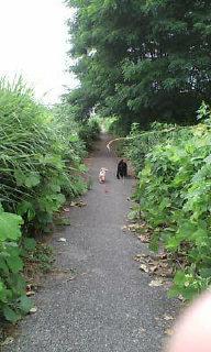 ポン太・リンダ散歩コース☆_e0083143_10332671.jpg