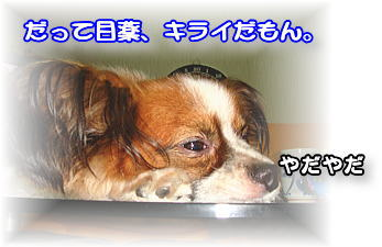f0011845_0274120.jpg