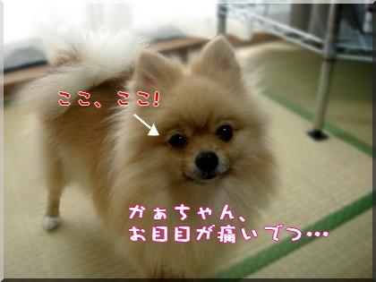 b0078073_1113497.jpg