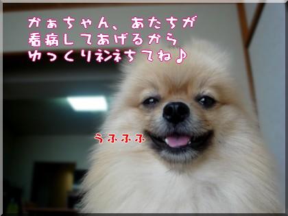 b0078073_11252835.jpg