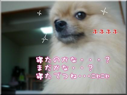 b0078073_11271059.jpg