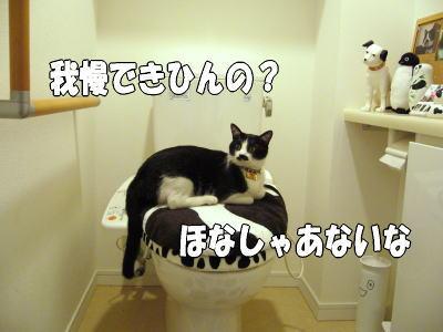 b0041182_25115.jpg