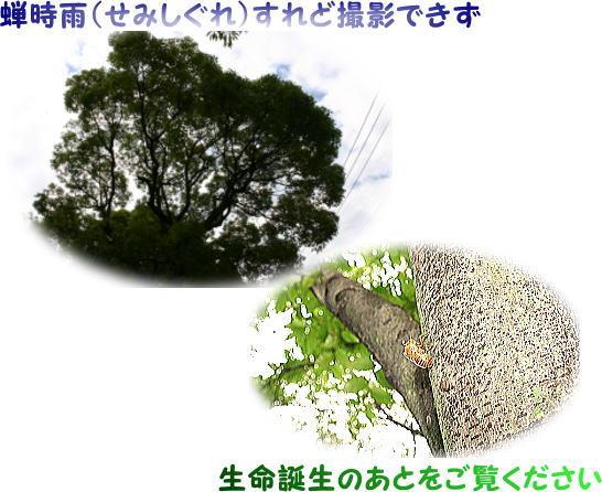 投稿 日田手話サークル「あさぎり」ブログvol.2_d0070316_9444461.jpg