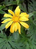 ハンカイソウの花です♪_f0099147_22163577.jpg