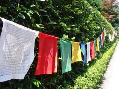 チベット砂曼荼羅(護国寺)_b0087556_1627109.jpg