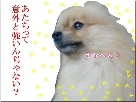 b0078073_2235731.jpg