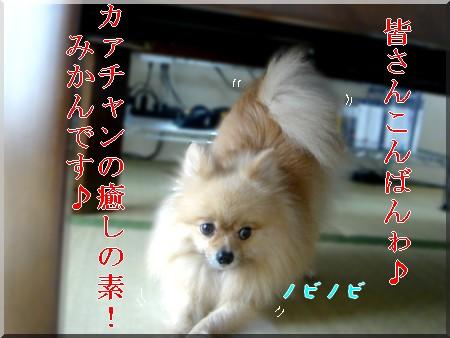 b0078073_2243846.jpg