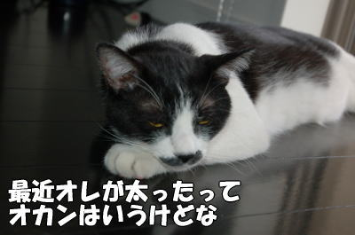 b0041182_037244.jpg