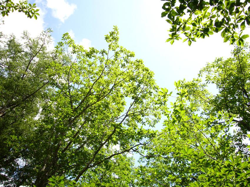 クッキングキャンプat中禅寺湖_b0025511_1653596.jpg
