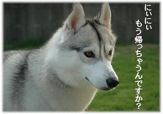 a0047325_855768.jpg