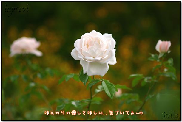 d0015026_9165172.jpg