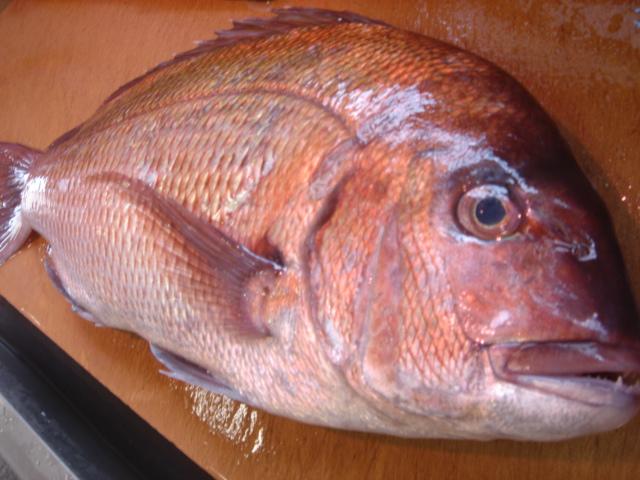 魚の三枚下ろし....鯛を使って説明します。_d0069838_12481881.jpg