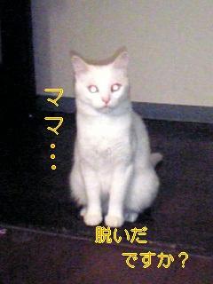 f0082938_1334742.jpg