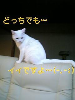 f0082938_1852311.jpg