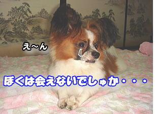 f0011845_16482844.jpg
