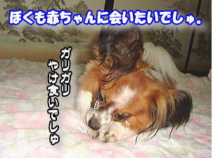 f0011845_16485873.jpg