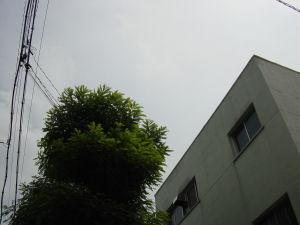 e0076682_1911985.jpg
