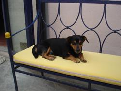 「アグリ犬」チャーリー_f0106597_1850174.jpg