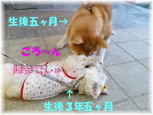 f0039907_036386.jpg