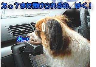 f0011845_12483279.jpg
