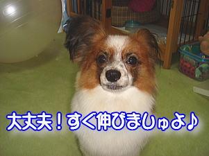 f0011845_1325784.jpg