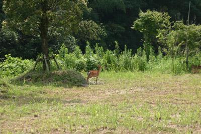 小鹿の訪問_a0072251_23472992.jpg