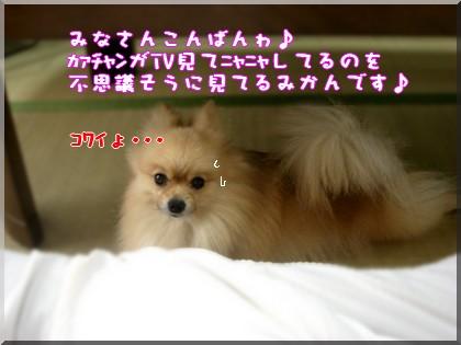 b0078073_01161.jpg