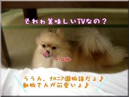 b0078073_0122615.jpg
