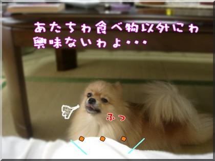 b0078073_02031.jpg