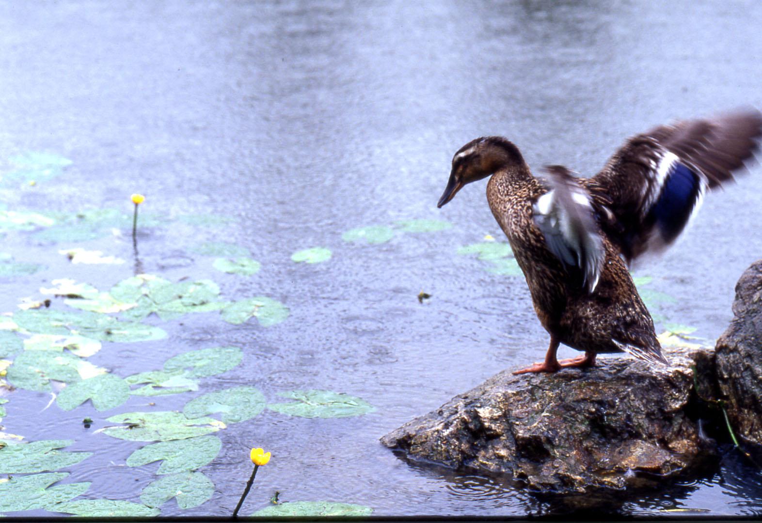 池畔_b0093088_512114.jpg