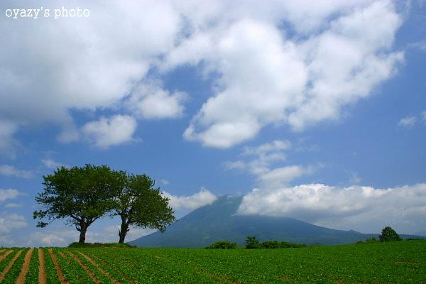 今日も曇り_a0071514_22262641.jpg