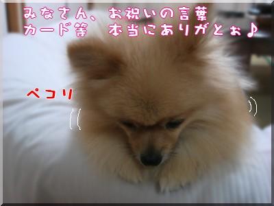 b0078073_236394.jpg