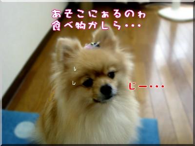 b0078073_2395439.jpg