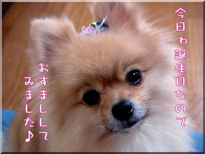 b0078073_23968.jpg
