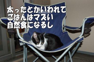 b0041182_20444511.jpg