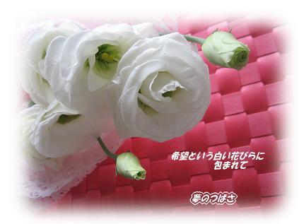 f0054187_8452054.jpg