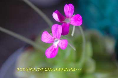 b0012811_92508.jpg