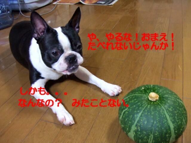f0059334_953449.jpg