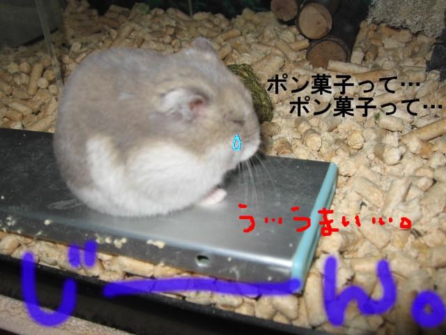 f0097734_1628497.jpg