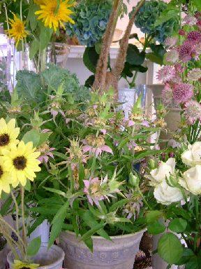 オークリーフ(緑の花)_f0049672_1221184.jpg